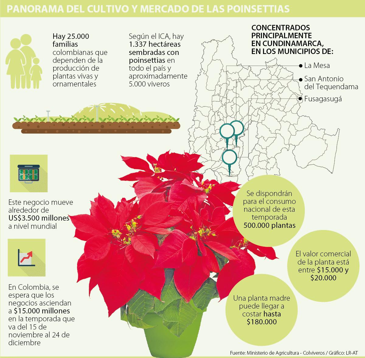 para que sirven las plantas ornamentales